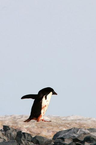 卖萌的南极动物