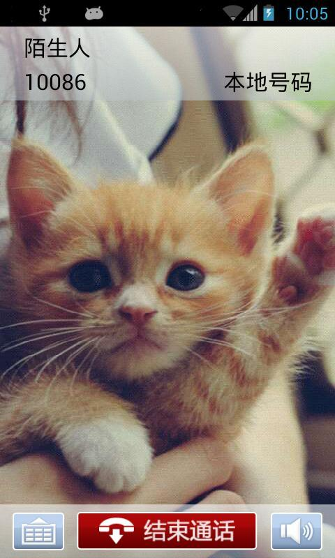 cc猫咪手机壁纸-猫咪老师手机壁纸高清_卡通猫咪手机
