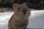 澳大利亚短尾矮袋鼠爱与游客自拍 系最快乐小动物