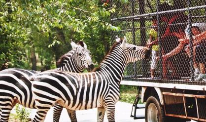 八达岭野生动物园动物伤人事件