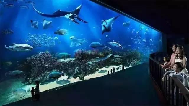 虎门万达奇幻海洋馆周末开业!