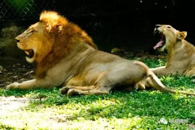 200 个种类,其中的印度野牛,鬣羚和马来亚虎都是值得一看的稀有动物.