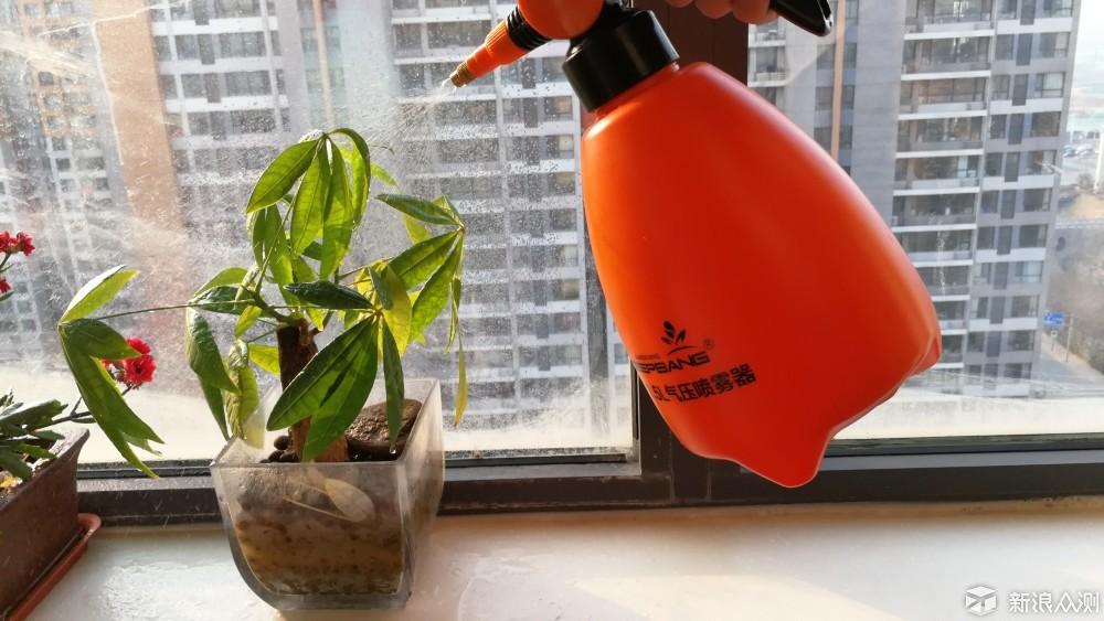 盆栽花卉_新浪众测