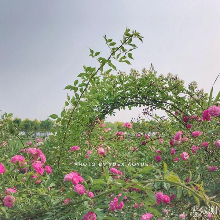 """路边野花如何拍的""""清新脱俗""""?手机摄影5招_新浪众测"""