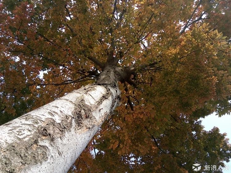 样片二: 外拍的路上,坐在树下休息,仰望天空,发现秋风瑟瑟,大树底下