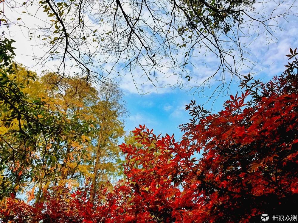 遇见最美的武汉——东湖之秋