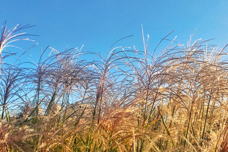 """手机如何拍美""""秋天的芦苇""""?教你6招!"""