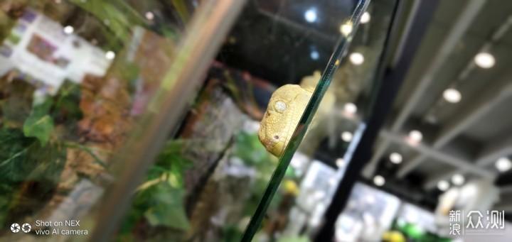 用vivo NEX拍出玻璃箱里的艺术感_新浪众测