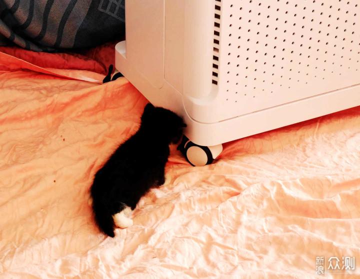 又大又白的空气净化器,让宠物呼吸得更健康_新浪众测