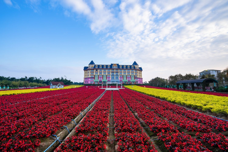 最长花期的郁金香花艺盛宴就在广州百万葵园