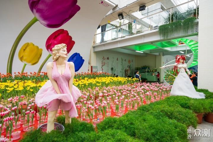 最长花期的郁金香花艺盛宴就在广州百万葵园_新浪众测