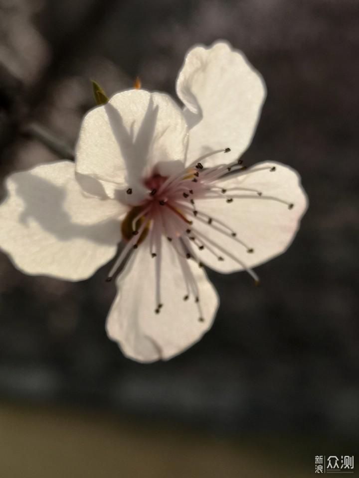 如何用手机的微距功能拍出清晰生动的花卉?_新浪众测